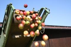 Apfelernte-2020-2