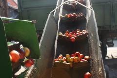 Apfelernte-2020-9a