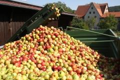 Apfelernte-2020-9e