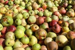 Apfelernte-2020-9f
