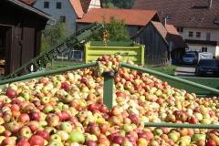 Apfelernte-2020-9j